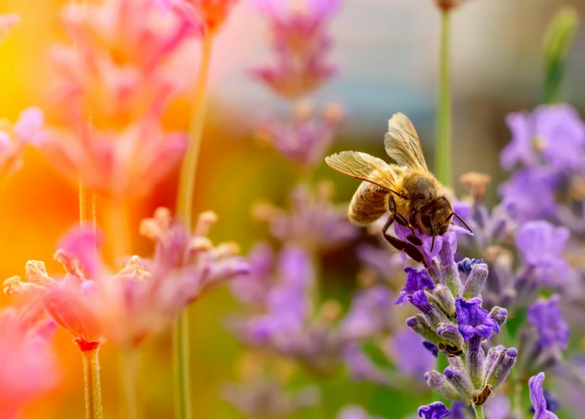 Bees, butterflies and other pollinating insects are vital cogs in the ecological machine.