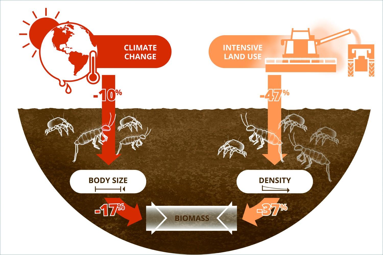 Illustration: Ckinate change and land use reduce the biomass of soil animals. Source: Lisa Vogel / UFZ