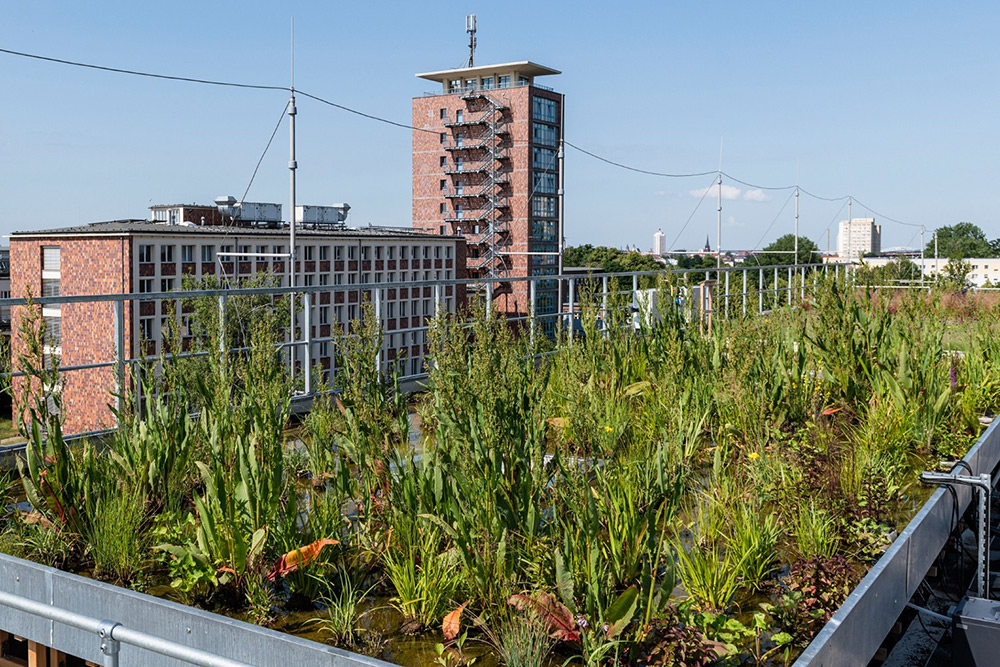Research green roof on the UFZ site in Leipzig Photo: André Künzelmann / UFZ