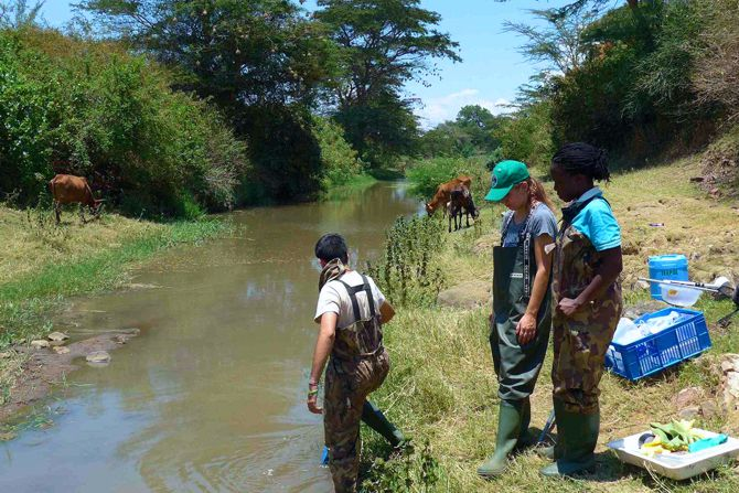 Researchers examined 48 bodies of running water in Kenya for pesticide contamination, composition of the biological communities and occurrence of snails. Photo: UFZ